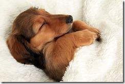dog-sleeping-bed-funny-104__605
