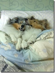 dog-sleeping-bed-funny-1001__605