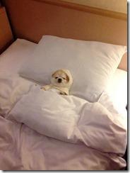 dog-sleeping-bed-funny-animal-photos-10__605