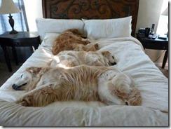 dog-sleeping-bed-funny-animal-photos-12__605