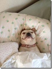 dog-sleeping-bed-funny-animal-photos-13__605