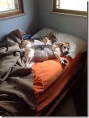 dog-sleeping-bed-funny-animal-photos-16__605