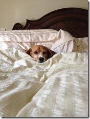 dog-sleeping-bed-funny-animal-photos-18__605 (1)