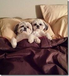 dog-sleeping-bed-funny-animal-photos-21__605