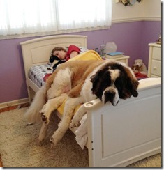 dog-sleeping-bed-funny-animal-photos-25__605