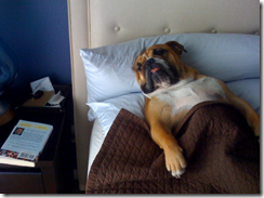 dog-sleeping-bed-funny-animal-photos-30__605