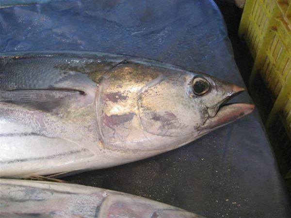 68魚攤主人阿伯很風趣 以前也是討海人.jpg