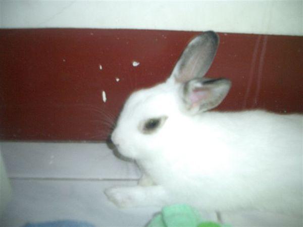 太亮了兔大爺有點不爽.JPG