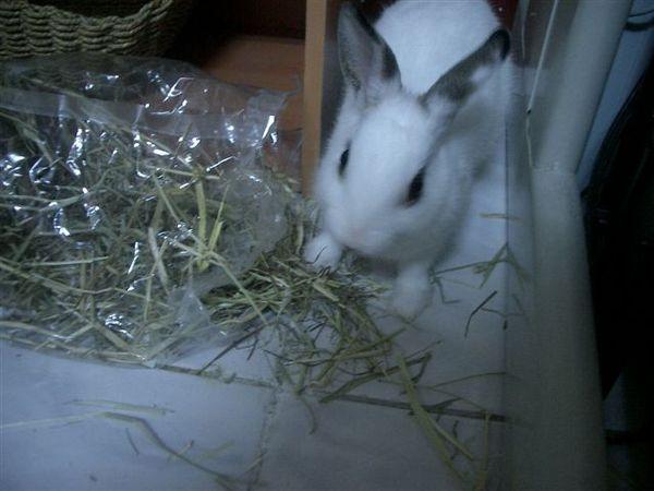 草跟兔.JPG