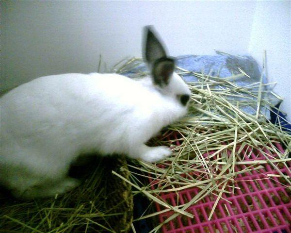 吃香噴噴的草草