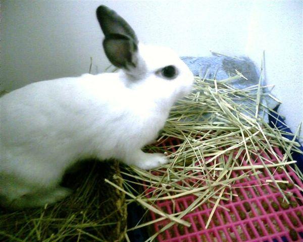 兔娘娘吃的正爽