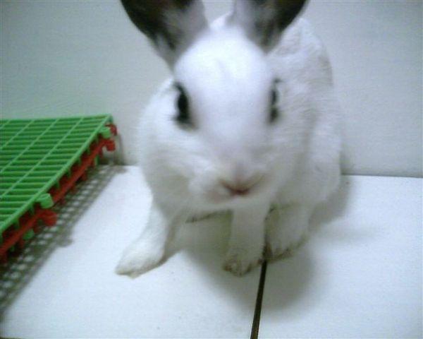 趴兔與瓷磚