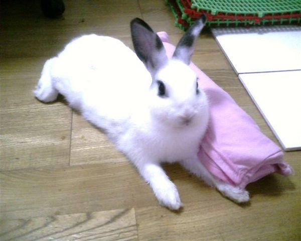 趴兔之本色