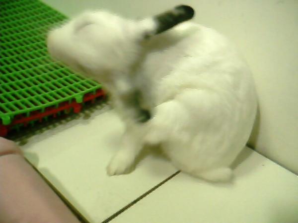 趴兔清乾淨