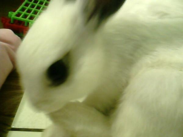 趴兔吃腳系列
