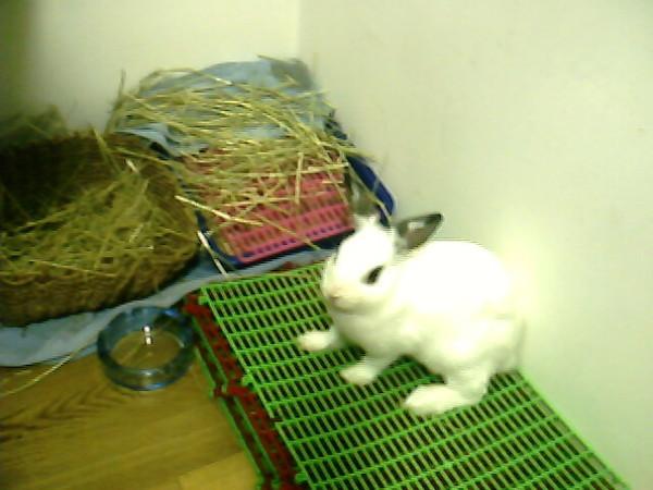 趴兔愛腳踏墊