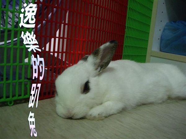 逸樂的趴兔.jpg