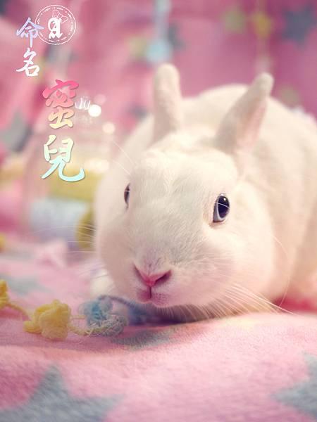 20121115蜜兒命名-01