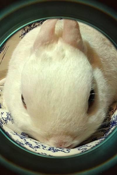 20121130白兔饅頭