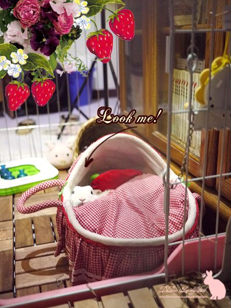 20121218草莓睡床-06