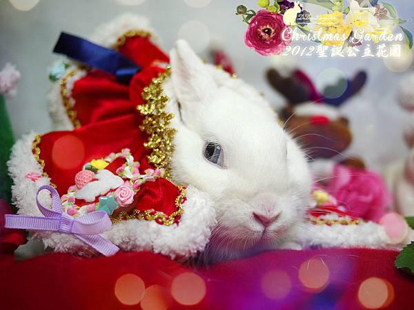 20121223聖誕公主花園-03