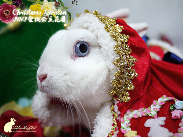 20121223聖誕公主花園-09