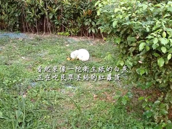20130131湯圓報告-10