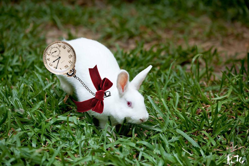 懷錶湯圓-01