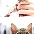 catsgyhjfjk