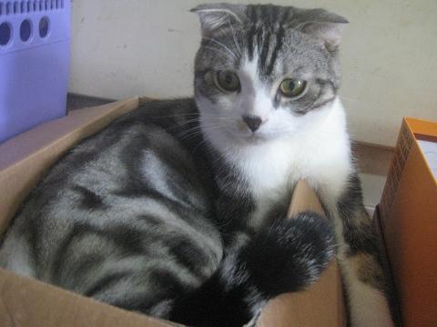 這隻是俗辣貓XD