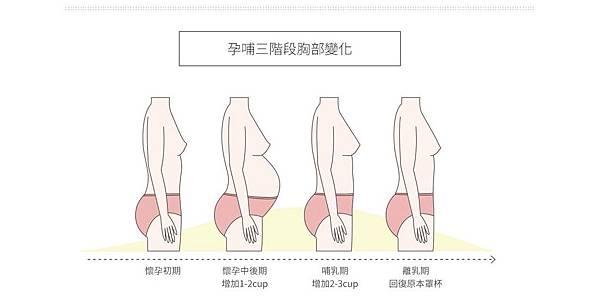 孕哺三階段胸部變化.jpg