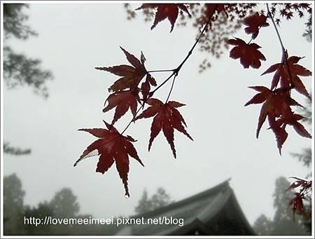 2013-11-17-00-01-39_deco.jpg