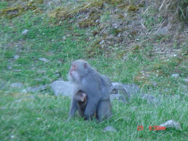 看到小猴子了沒?