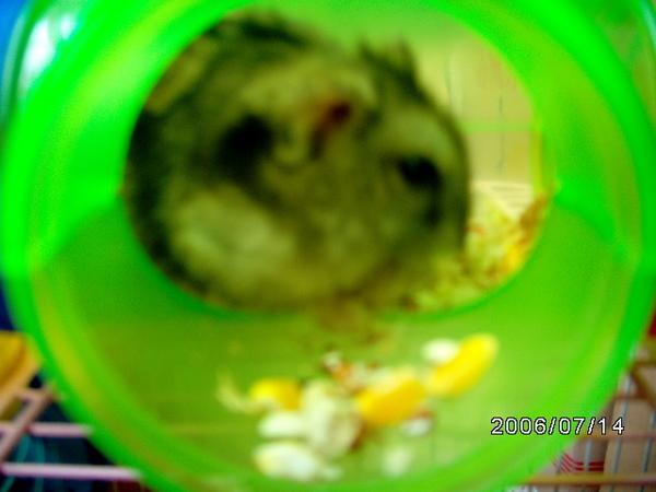 公鼠鼠吃吃~