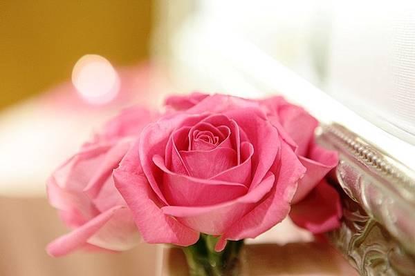 好美的粉紅色玫瑰花