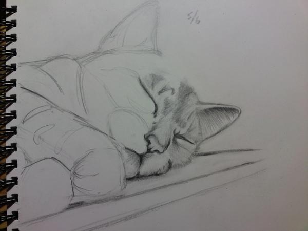 素描-沈睡的貓1