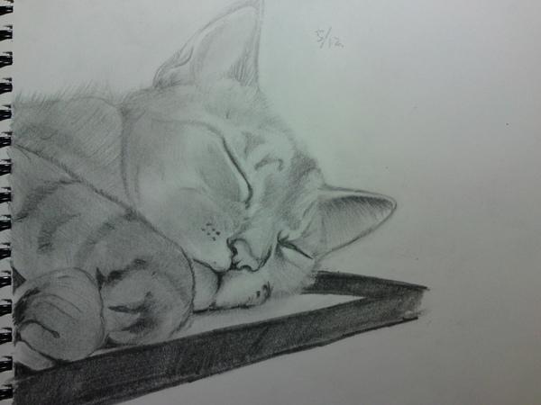 素描-沈睡的貓2