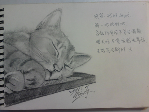 素描-沈睡的貓3