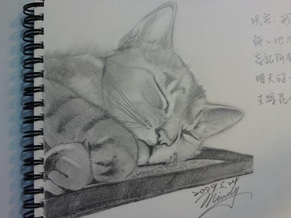 素描-沈睡的貓4