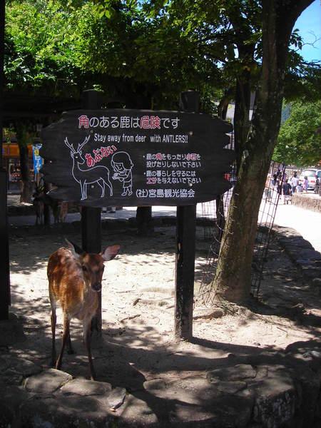 鹿的警告牌和鹿