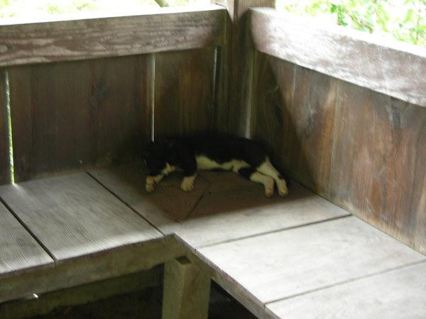 在裡面睡覺的貓貓