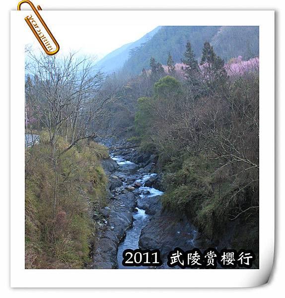 2011 武陵  賞櫻 018 改.jpg