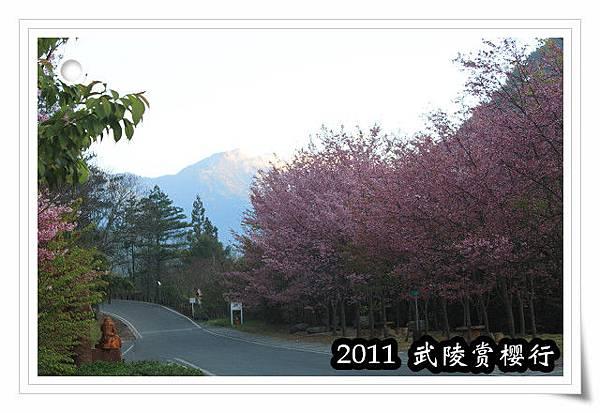 2011 武陵  賞櫻 016 改.jpg