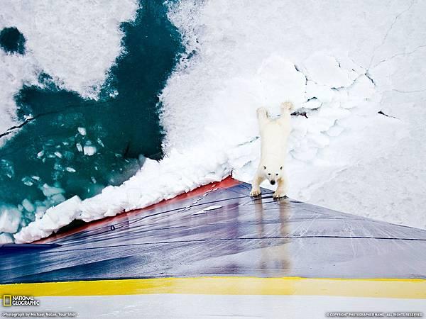polar bear1.jpg