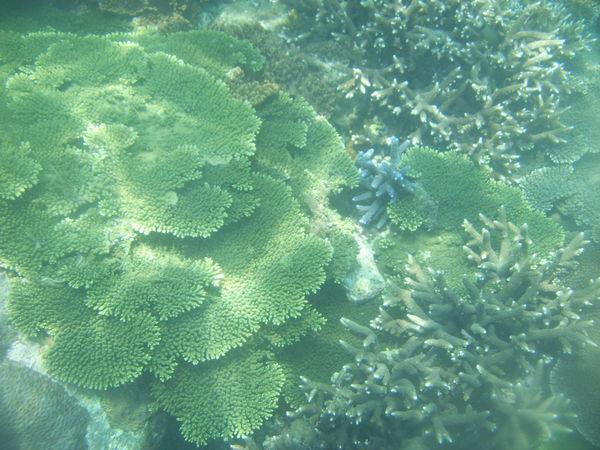 浮潛所見1