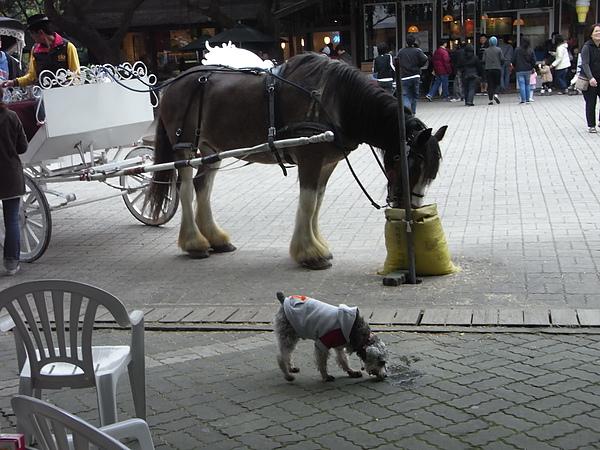 小馬與馬.JPG