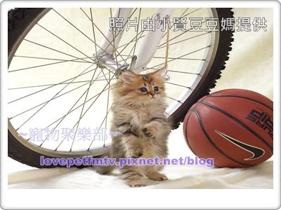 個性活潑的貓(網誌用).jpg