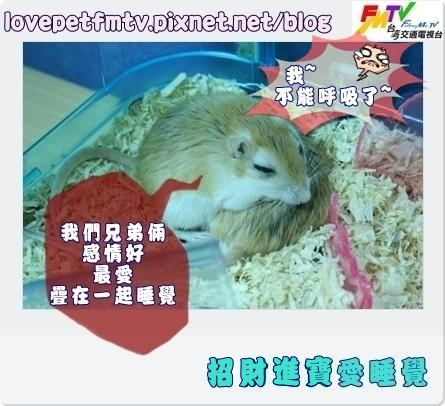 昭財進寶愛睡覺2.JPG