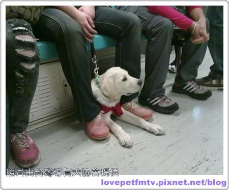 05.導盲犬-Victor2.jpg