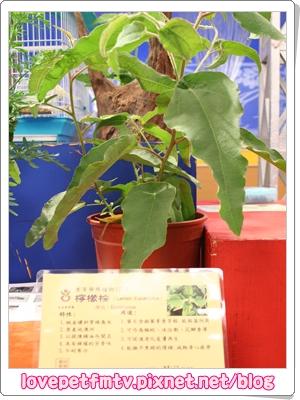 6.香草館.JPG